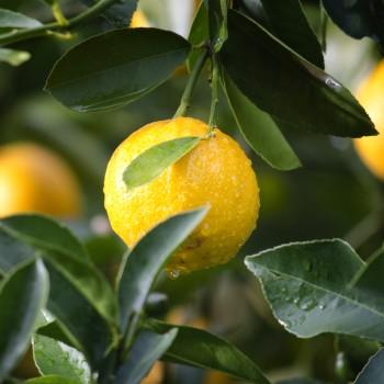 1 - pixabay_1846358 - orange close up - 35.25 x 23.5 @ 300 dpi